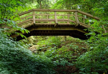 An old wooden footbridge in a forest. photo