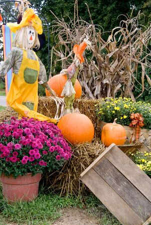 A Halloween scene with a scarecrow and pumpkins. Stock Photo - 5615397