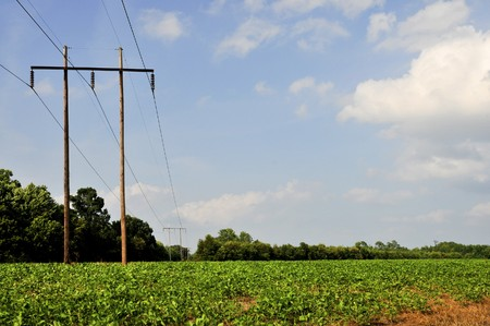 An electrical pole in a sprawling soybean field photo