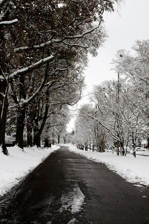 A snow storm in a residential neighborhood photo