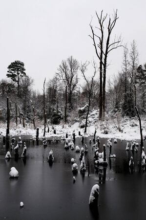 A small swamp area in the snow. photo