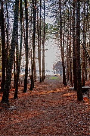 A walking path through a green forest photo