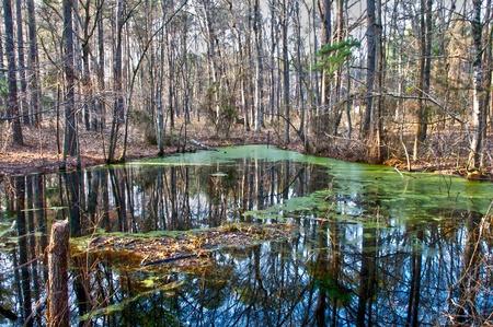 marsh plant: Una vecchia palude in una zona rurale Archivio Fotografico