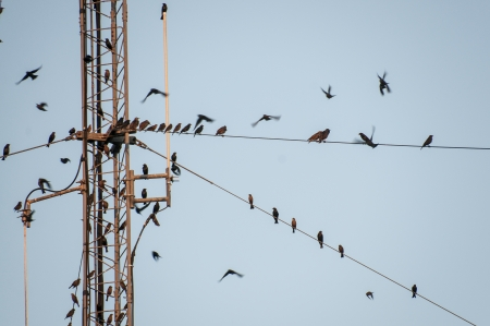 Wild birds sitting on high tension guide wires photo