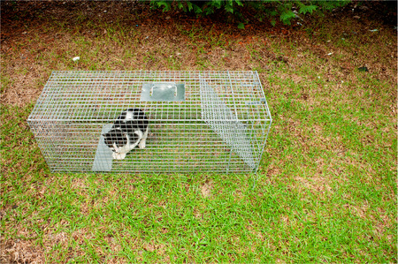 animal trap: Cat trapped in a humane non lethal animal trap