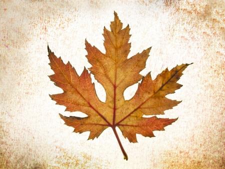 hojas: textura Caída de las Hojas en el árbol de otoño Sobre Fondo abstracto