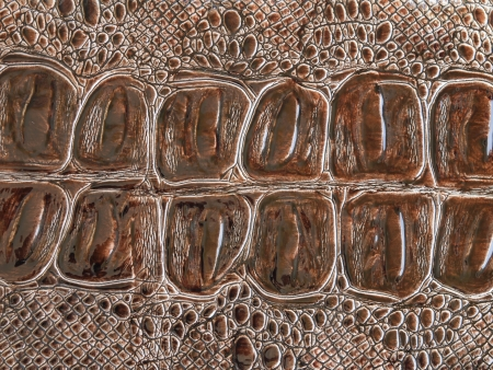 crocodile skin texture brown artificial Stock Photo - 16485427