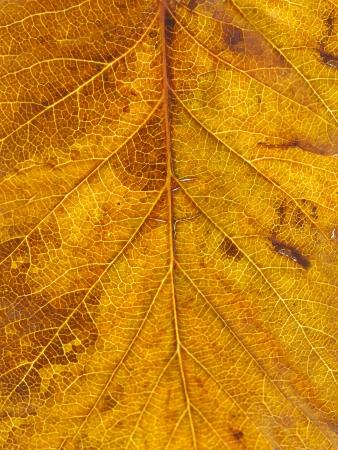 textuur boom bladval in de herfst op een witte achtergrond Stockfoto