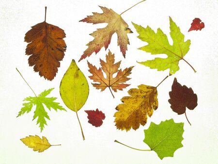 textuur bladval in de herfst boom op abstracte achtergrond Stockfoto