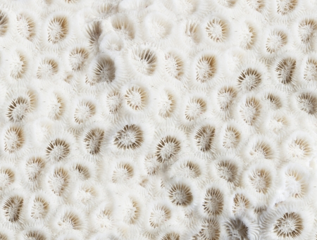 An interesting texture from a closeup of coral rock Stock Photo - 17247678