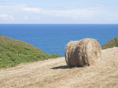 cropland: cropland with hay bale on the coast of Asturias, Spain