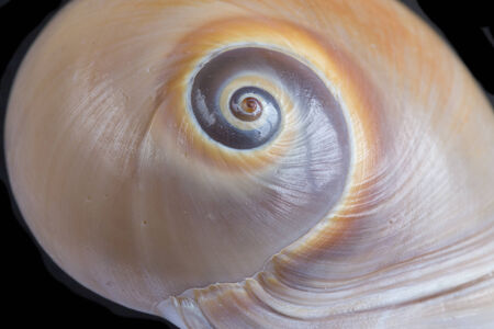 marine animal shells with focus on the spiral