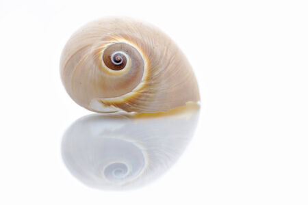 marine animal shell forming a heart with her reflection