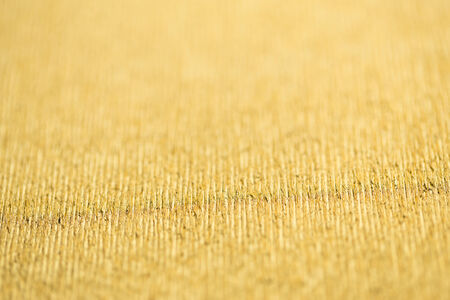 immobile: texture of gold wrapping paper
