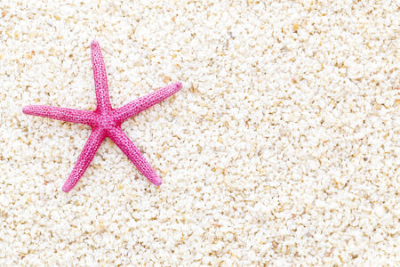 Starfish on the beach in the summertime  photo