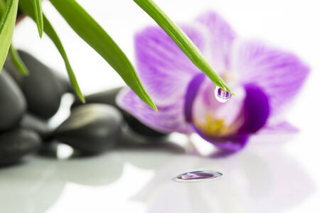 purple orchid with blur and drop Reflected in Water Stock Photo