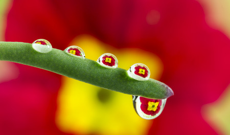 red flower pot mirroring inside dew drops photo