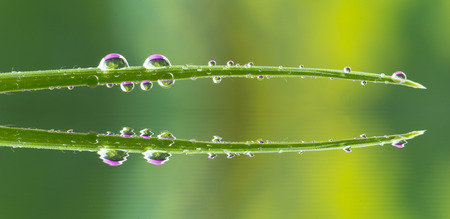 water drops on grass with purple