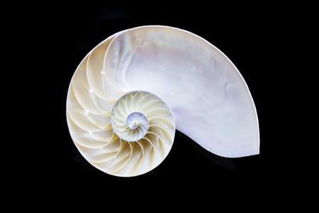 nautilus shell: the nautilus shell section Stock Photo