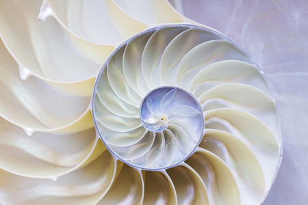 logarithmic: the nautilus shell section Stock Photo