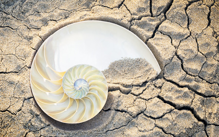 sectioned: sectioned nautilus sand bottom creek Stock Photo
