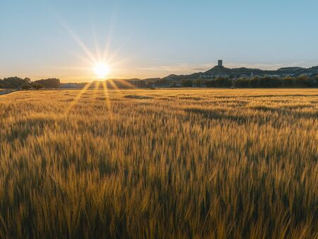Cereal field at sunset with Castilian village with tower in background, Langa de Duero, Castilla Leon, Spain