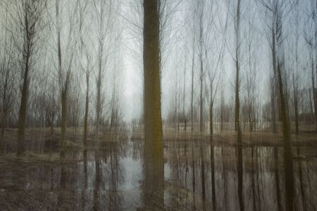 blurred natural background - tree trunks in fog with blurred motion and reflection in water.