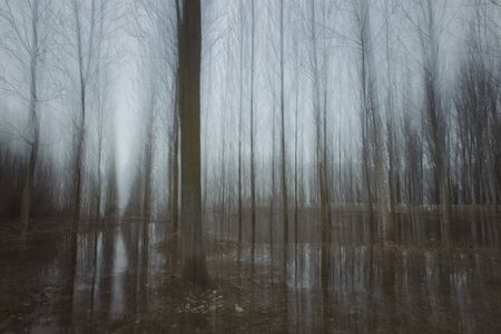 blurred natural background - tree trunks in fog with blurred motion and reflection in water, blue tone. 版權商用圖片