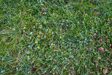Blue different shape chemical fertilizer granules on green grass.