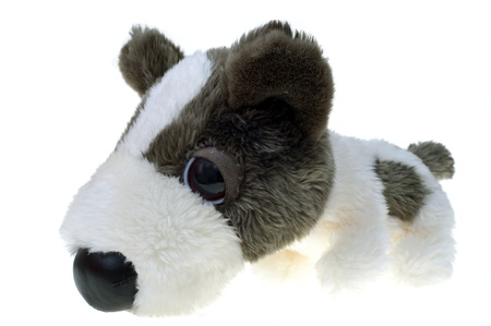 furry stuff: Puppy toy isolated