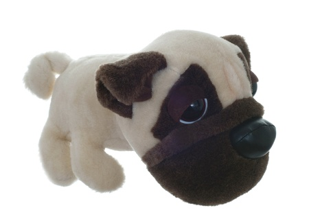 Puppy toy isolated photo
