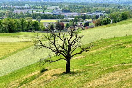 Landscape during spring time in Liechtenstein 24.4.2020