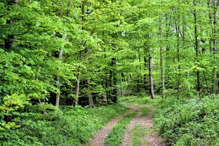 Spring time in a forest in Liechtenstein 24.4.2020