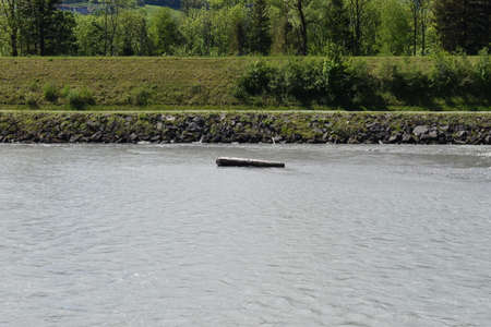 Drifting wood in the rhine river in Switzerland 27.4.2020