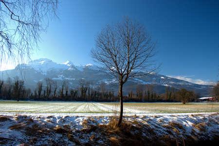 Tree on a meadow in the area of Vaduz in Liechtenstein 7.1.2021