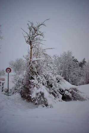 Landscape in Vaduz in Liechtenstein disappears in a lot of fresh snow 14.1.2021 Imagens