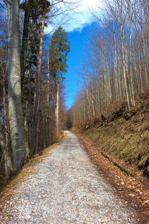 Hiking day through a green forest in Vaduz in Liechtenstein 17.2.2021