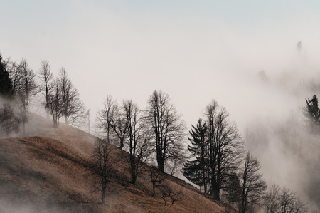 Foggy tree slope in the winter