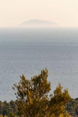 View of distant island in the haze over pine treetops