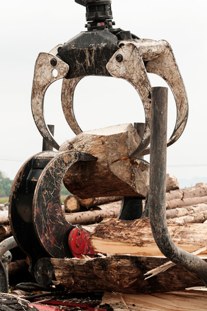 Large log being split by hanging timber jaws and hydraulic log jaw wood splitter Stock Photo