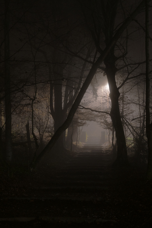 Mysterious stony stairs in dense fog at night in forest. Horror and mystery concepts. Reklamní fotografie