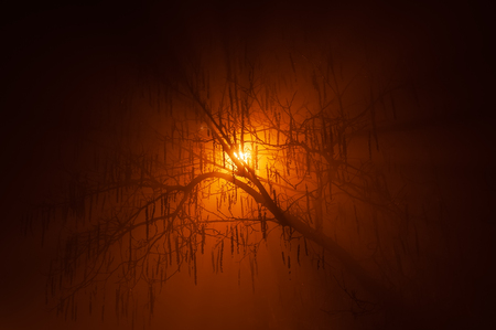 Mysterious silhouette of backlit naked tree in dense fog at night in the winter with radiant orange glow. Halloween and mystery concepts.