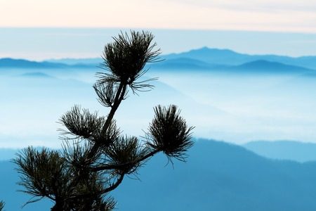 Closeup of pine tree branch with foggy hills and mountain ranges in background. Environment, travel, beauty in nature and hiking concepts.