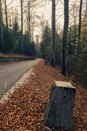 Old asphalt road to Mangart through mixed coniferous and deciduous forest in late autumn. Weathered concrete bollards and dry leaves on the roadside.