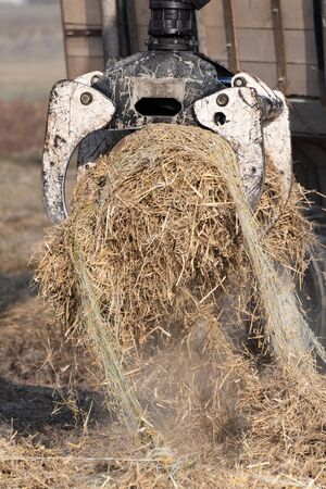 Closeup of bundle of dry straw for ground cover being lifted by forestry grapple. Agriculture, farming, forestry and mechanization concepts. Foto de archivo