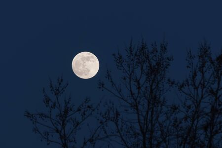 Full moon behind naked tree branches in a cold winter night. Astronomy, season, nature and mood concepts. 스톡 콘텐츠