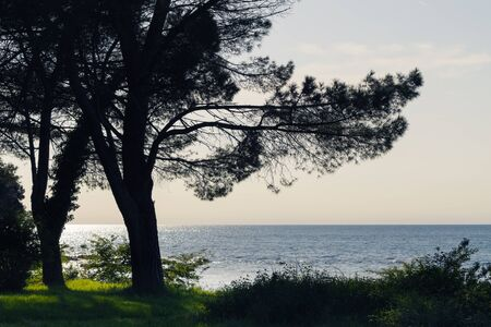 Silhouette of pine tree by the coast and glittering sea in background. Vacation, coast and optimism concepts.