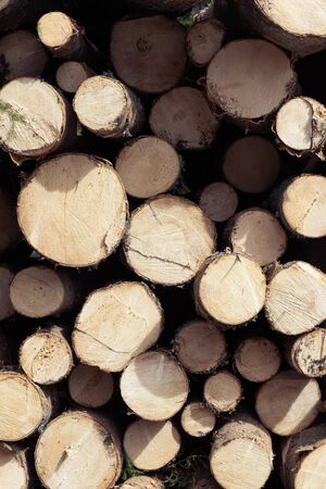 Frontal view closeup of cut spruce tree firewood logs of various sizes. Forestry, renewable fuel, sustainability and environment concepts. 版權商用圖片