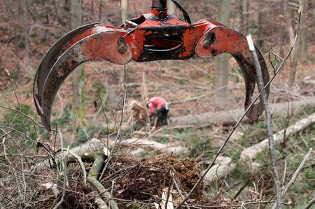Forestry grapple for picking up timber and forestry worker in background. Forestry, machinery, environment, workers and protective gear concepts. Stockfoto