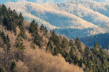 Slope with spruce and naked trees in early spring and woodland in background. Nature, forestry, environment and climate change concepts. 版權商用圖片 - 129977594